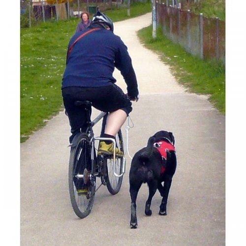 hundebuegel-springer